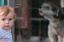 Fotografii cu bebe David